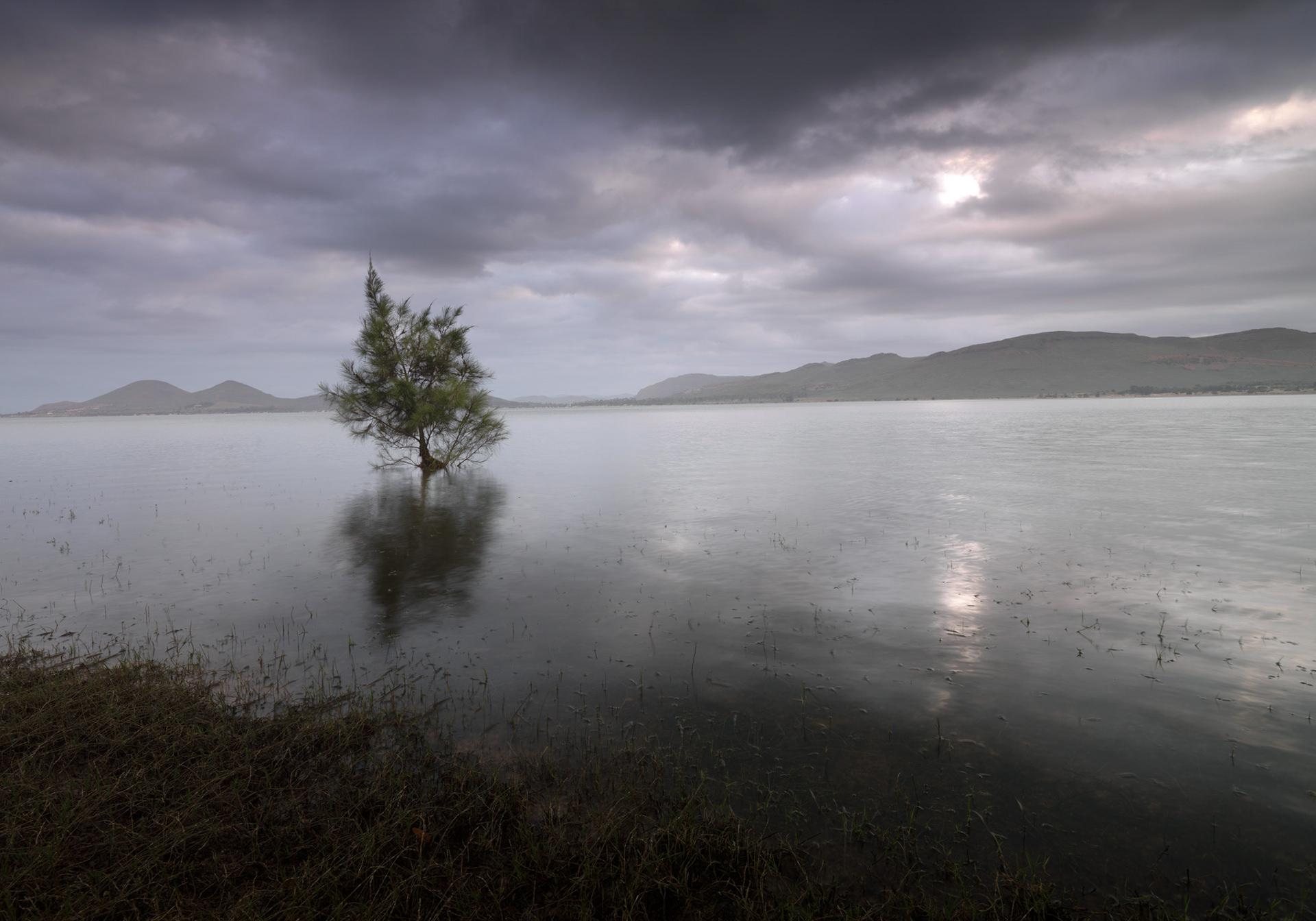 HG 0010, landscape, sea, tree, personal work, www.ankeluckmann.com, anke luckmann,