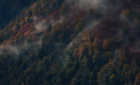 ©ankeluckmann1961, pyrenees, trees, anke luckmann