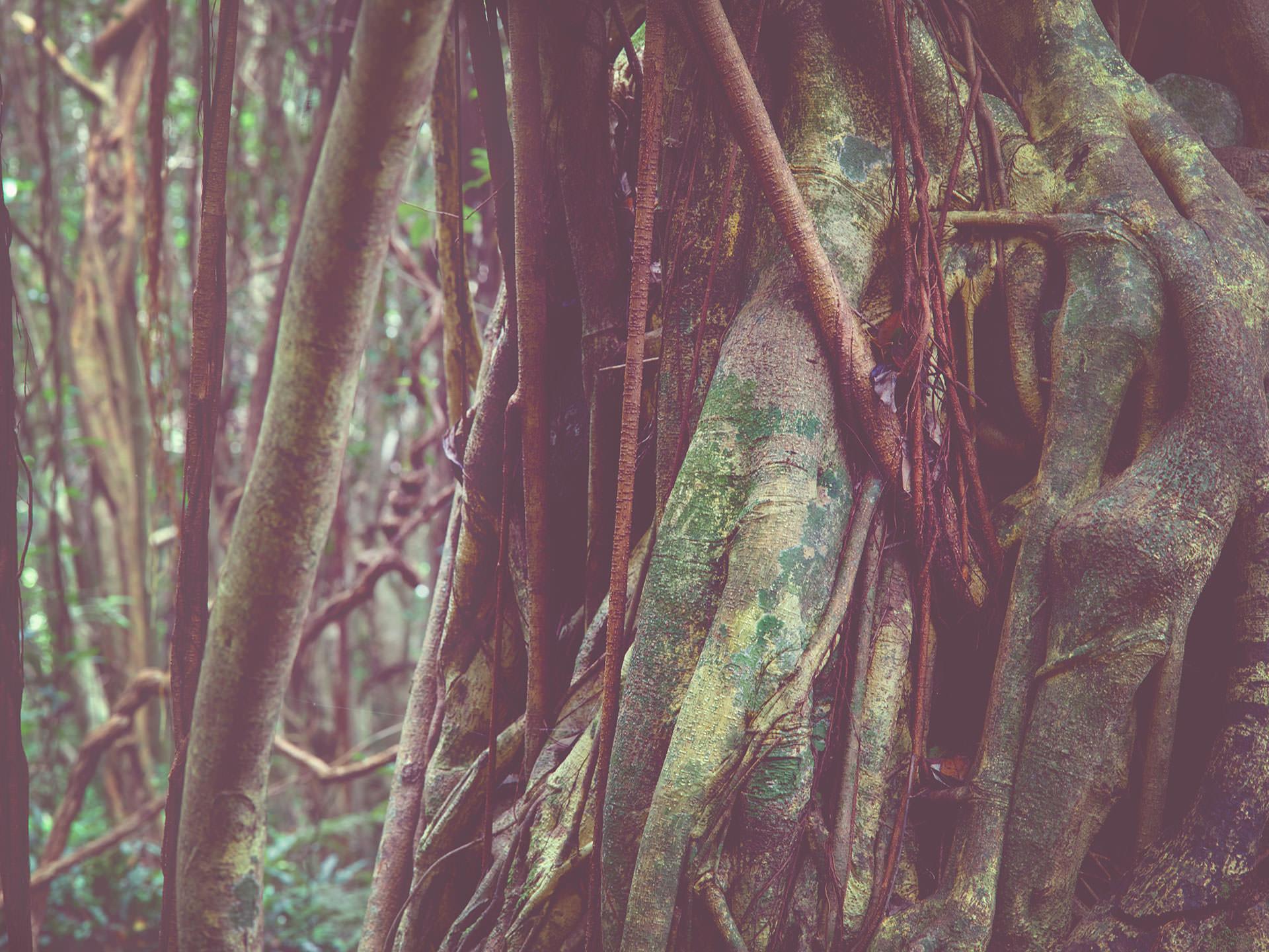 JAPANESE GREEN TREE